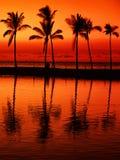 Plage de paradis au coucher du soleil avec les palmiers tropicaux