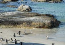 Plage de pingouins à Capetown Photos stock