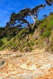 Plage de point de Tapeka, baie des îles, Nouvelle-Zélande photographie stock libre de droits