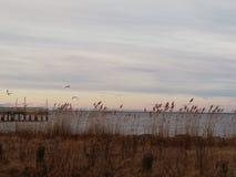 Plage de région boisée au Delaware photographie stock libre de droits