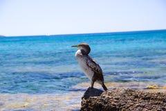 Plage de Rhodos Grèce d'oiseau Photos stock