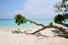 Plage de sable de mer Images libres de droits