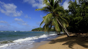 Plage de Tartane, la Martinique Image stock