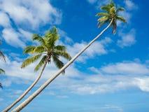 Plage de Tropica Photographie stock