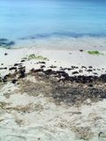 Plage des Caraïbes naturelle Photo libre de droits