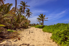 Plage Dominicana Images stock