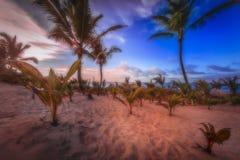 Plage Dominicana Photographie stock libre de droits