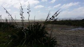 Plage du Nouvelle-Zélande Photo stock
