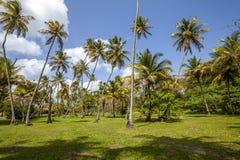 Plage du Tobago Image libre de droits