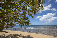 Plage du Tobago images stock