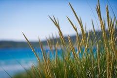 Plage ensoleillée avec les dunes de sable, l'herbe grande et le ciel bleu Image stock