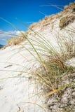 Plage ensoleillée avec les dunes de sable, l'herbe grande et le ciel bleu Images stock