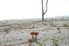 Plage et champignon Photo stock