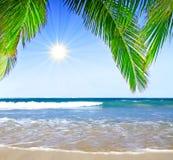 Plage et paume rêveuses des Caraïbes Image libre de droits