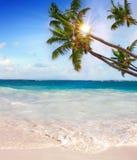 Plage et paume rêveuses des Caraïbes Photo libre de droits