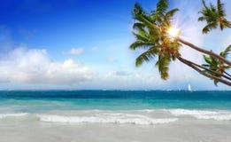 Plage et paume rêveuses des Caraïbes Photo stock