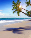 Plage et paume rêveuses des Caraïbes Photos stock