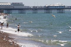 Plage et pilier de Brighton Photos stock