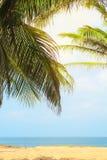 Plage exotique avec des palmiers sur les rivages de l'Océan Indien image libre de droits