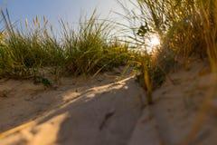Plage herbeuse au coucher du soleil Photographie stock