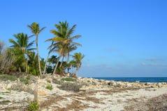plage la Caraïbe Images stock