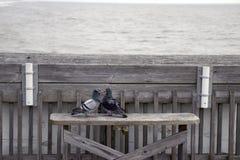 Plage la Caroline du Sud de folie, le 17 février 2018 - deux pigeons se reposant sur un banc sur le pilier de pêche regardant fix Images stock