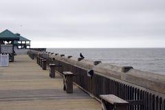 Plage la Caroline du Sud de folie, le 17 février 2018 - promenade vide avec le pigeon se tenant sur la balustrade Image libre de droits
