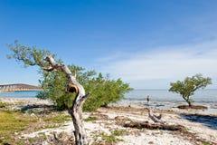plage la Floride Images libres de droits