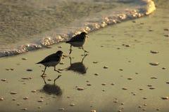 Plage le Golfe du Mexique de Panamá City près des joueurs de pipeau de sable de coucher du soleil pittoresques photos libres de droits