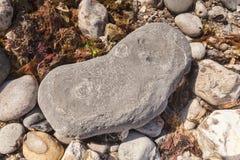 Plage Lyme REGIS R-U de Monmouth de fossiles d'ammonite Images stock