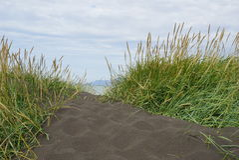 Plage noire en Islande avec l'herbe Image stock