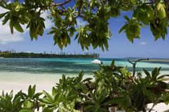 plage Pacifique du sud photographie stock libre de droits