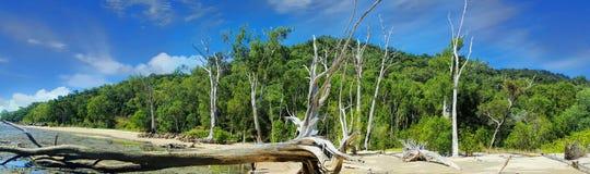 Plage près des cairns avec le bois de flottage photos libres de droits