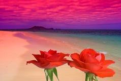 Plage rêveuse - avec des roses Image libre de droits
