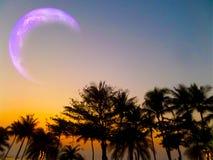 plage rare de noix de coco de silhouette de phénomène de lune d'éclipse photo libre de droits