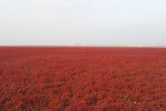 Plage rouge en automne Photo stock