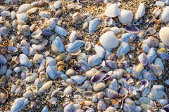Plage Sable shells photos stock