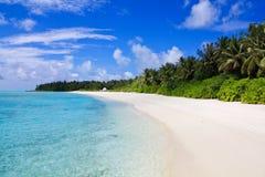 Plage sablonneuse avec des paumes des MALDIVES Photo libre de droits