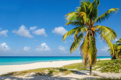 Plage sablonneuse avec le palmier de noix de coco, des Caraïbes Photographie stock libre de droits