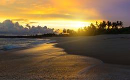Plage sablonneuse d'été avec des palmiers dans le coucher du soleil Photo stock