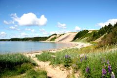 Plage sablonneuse dans Newfoundl rural photo libre de droits