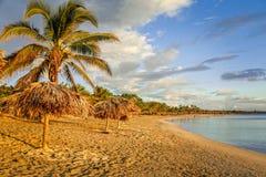 Plage sablonneuse de Rancho Luna avec des paumes et des parapluies de paille sur le rivage, Cienfuegos, Cuba photos stock