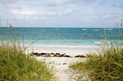 Plage sablonneuse, eau bleue et ciel bleu nuageux Image stock