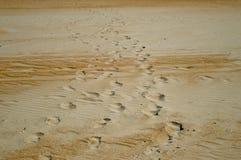 Plage sablonneuse, empreintes de pas dans le sable Photos libres de droits