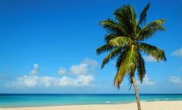 Plage sablonneuse tropicale avec le palmier exotique, contre le ciel bleu et l'eau d'azur Image libre de droits