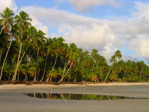 Plage sauvage tropicale   photo libre de droits