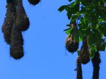 Plage sauvage tropicale, Panama Photographie stock