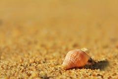 Plage Shell Photos libres de droits