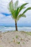 Plage spectaculaire et impressionnante de paradis chez l'Itacare Image stock