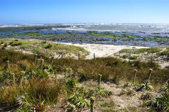 Plage sur le moka d'île Image libre de droits